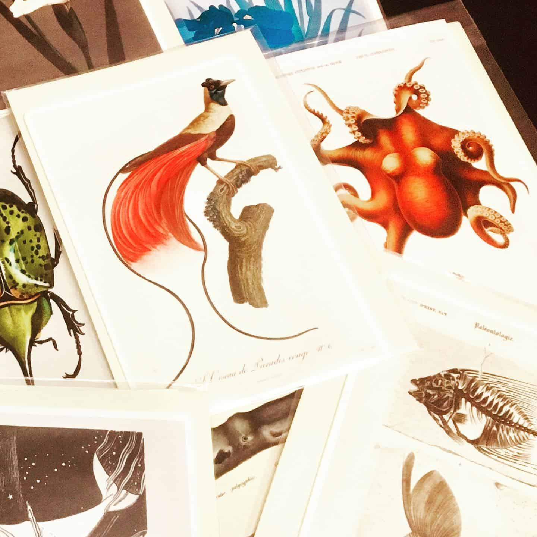 Vintage Natural History cards