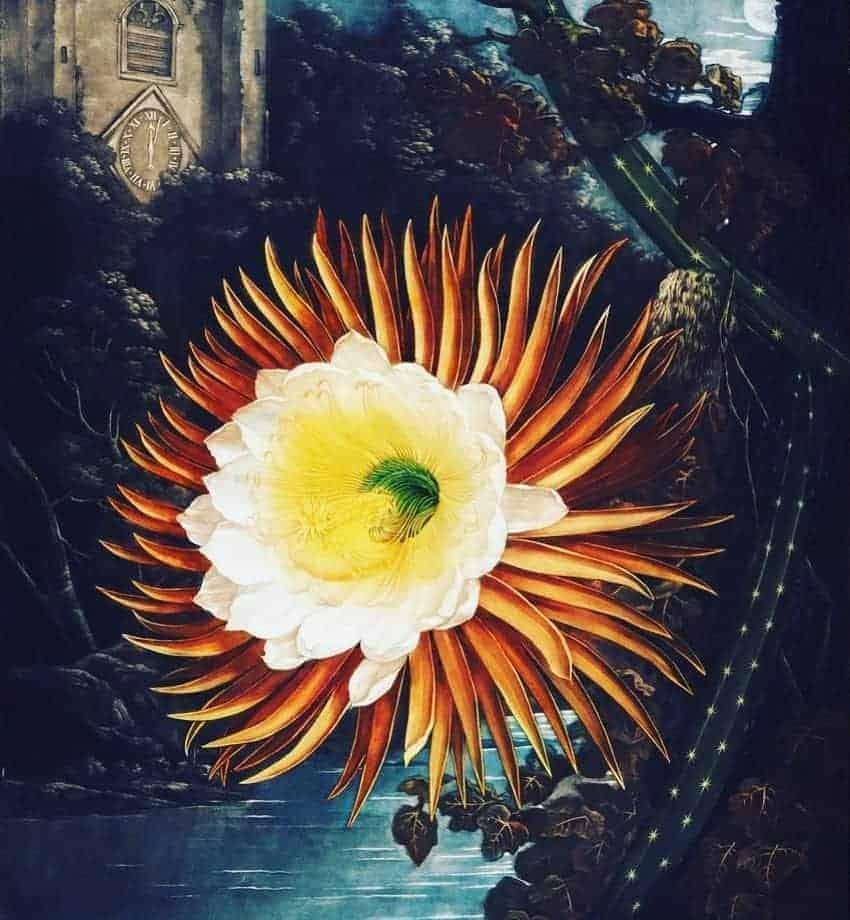 Robert John Thornton's (c. 1768–1837) The Temple of Flora
