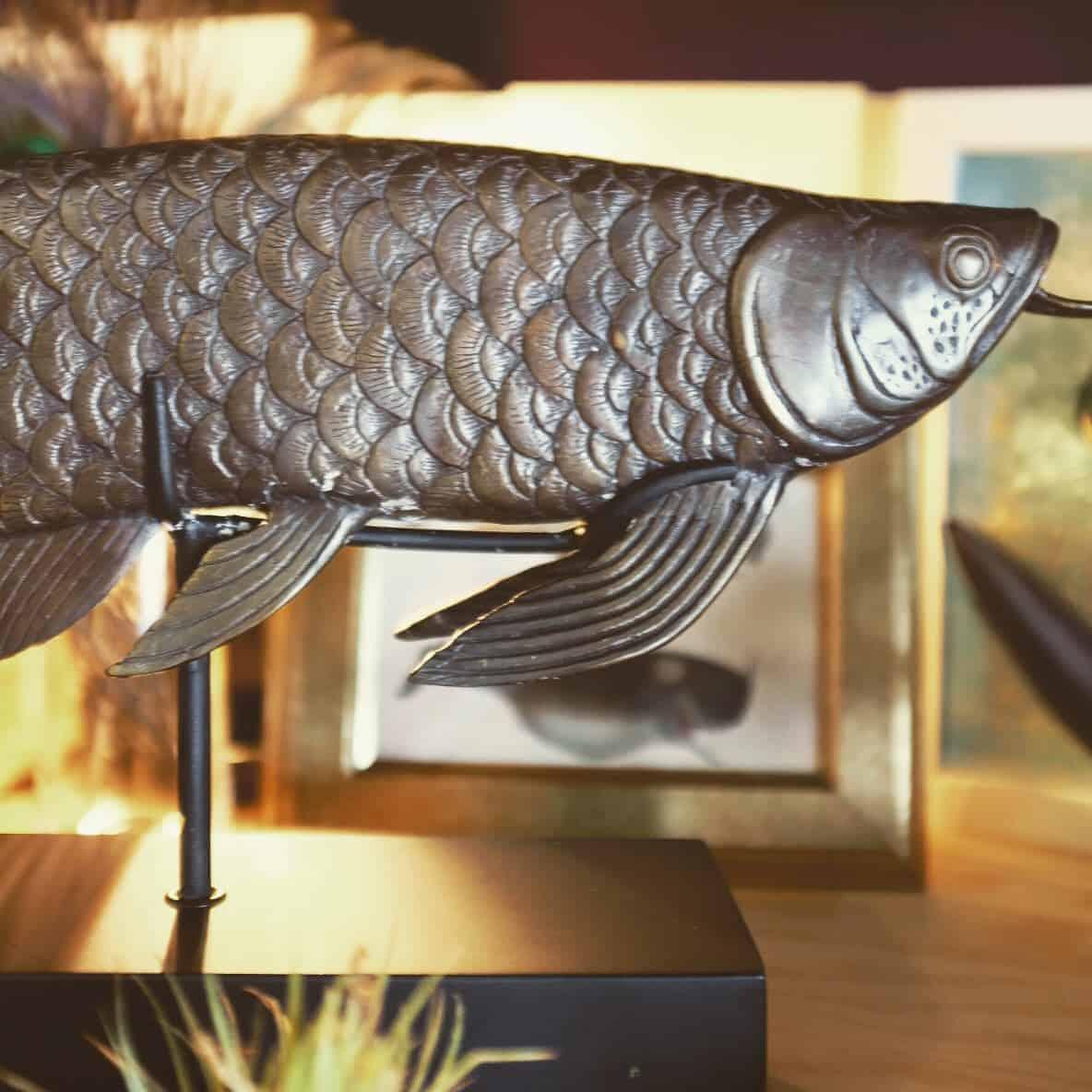Bronze Arowana fish
