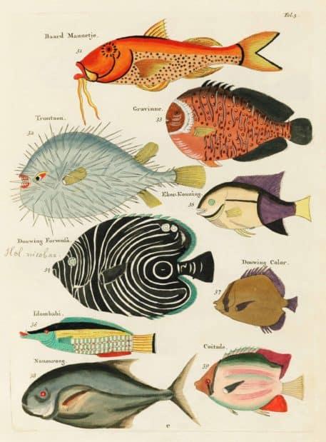 Historia natural de las curiosidades más raras del Océano Índico 7