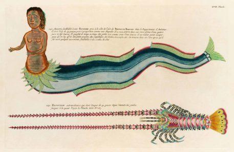Historia natural de las curiosidades más raras del Océano Índico 8