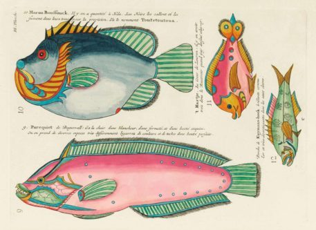 Historia natural de las curiosidades más raras del Océano Índico 5