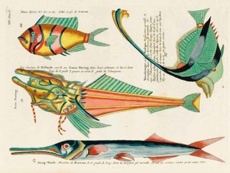 Historia natural de las curiosidades más raras del Océano Índico 11