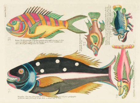Historia natural de las curiosidades más raras del Océano Índico 9