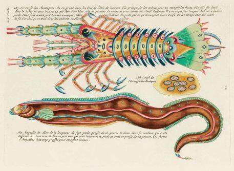 Historia natural de las curiosidades más raras del Océano Índico 2