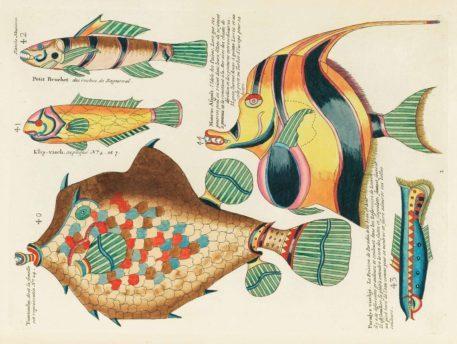 Historia natural de las curiosidades más raras del Océano Índico 10