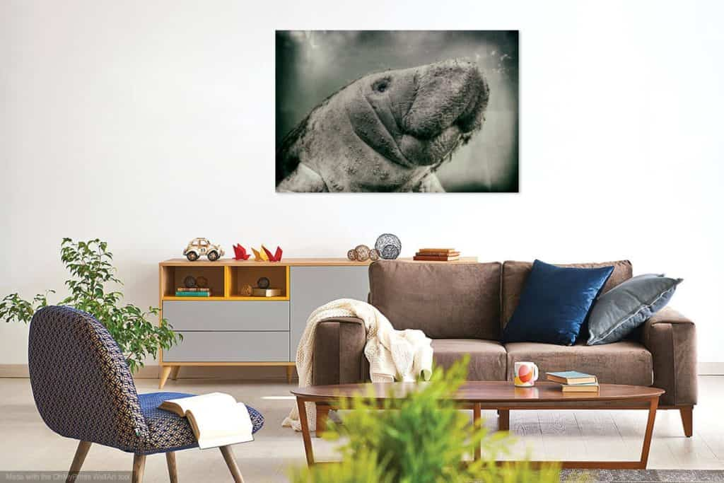West Indies Manatee Calf Portrait