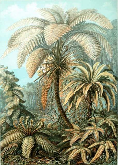 Ernst Haeckel Kunstformen der Natur