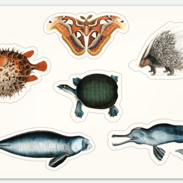 Vintage Natural History Illustrations Sticker Sheet 152x102mm