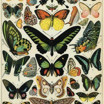 Cavallini & Co Vintage charts Butterflies