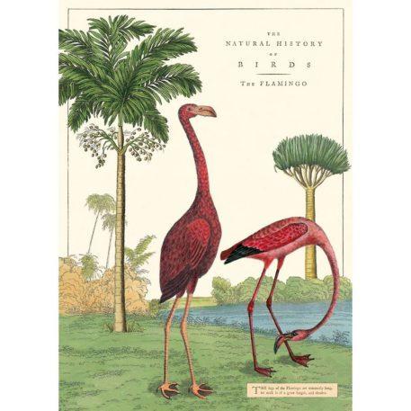 Flamingos Cavallini & Co