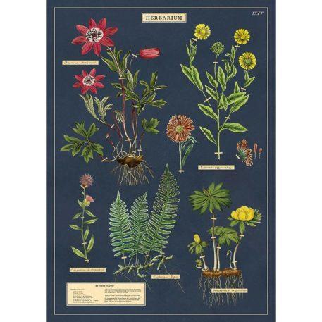 Herbarium Cavallini & Co
