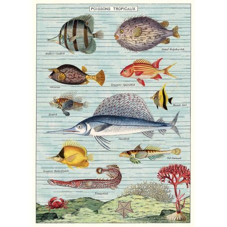 Tropical Fish Cavallini & Co
