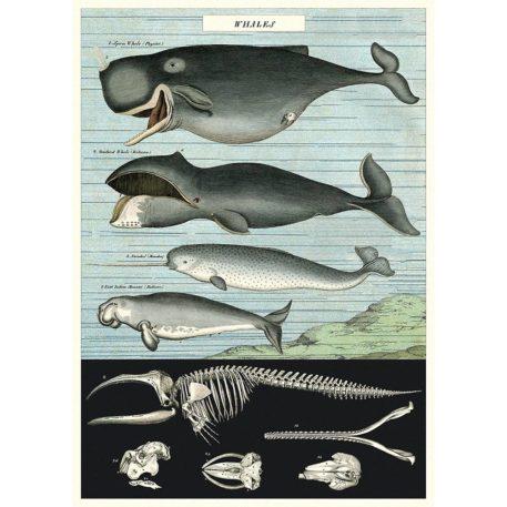 Whales Cavallini & Co