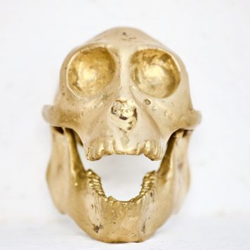 Cast Bronze of Hominoidea Skull