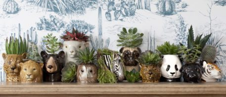 Colección de jarrones de cerámica animal con suculentas