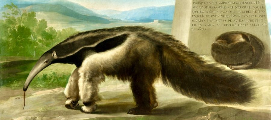 His Majesty's Giant Anteater by Francisco de Goya?